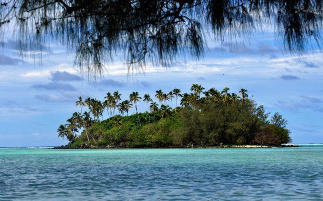 A palm covered motu viewed under a pine branch Rarotonga