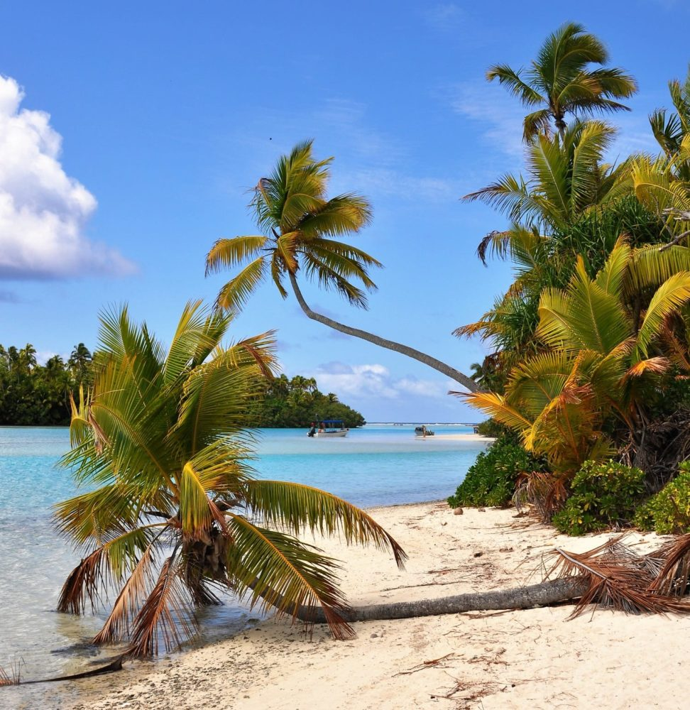 Palms bending across the beach at the edge of the lagoon Cook Islands