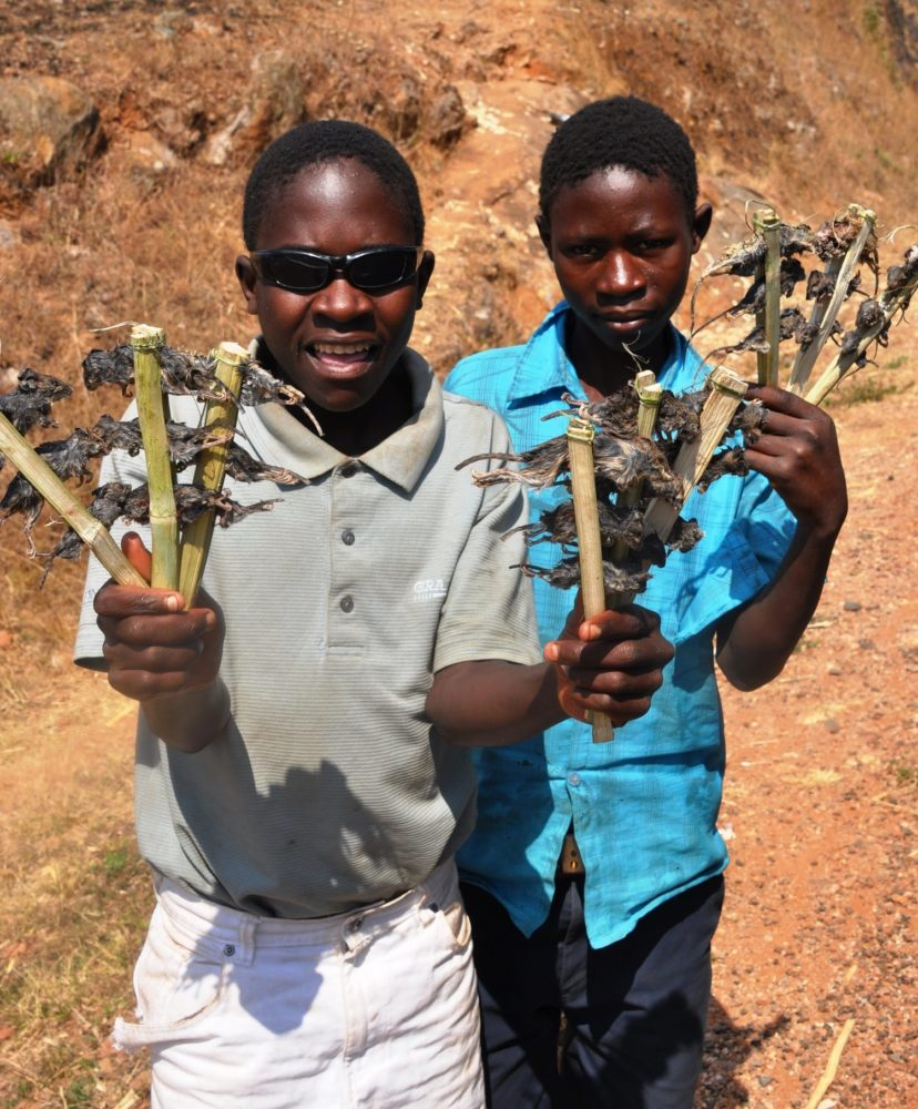 Two boys selling barbecued mice pinned to fanned sticks
