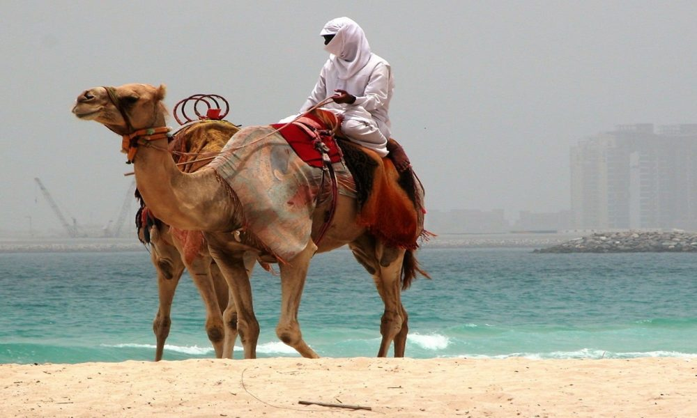 An Arab swathed in white sits on one camel and leads another along Jumeirah Beach