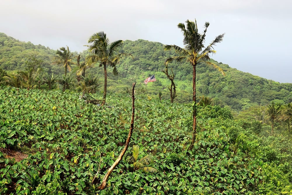 An American flag planted in the middle of vegetation at the top of a mountain in American Samoa