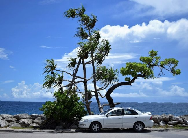 A white car parked in front of waving pandanus trees on the edge of the lagoon