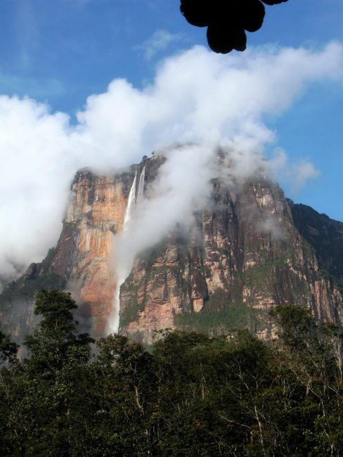 Angel Falls , shrouded in cloud and surrounded by rainforest