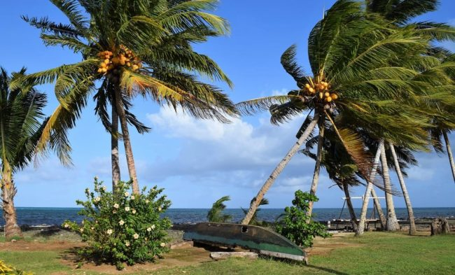 An upturned canoe beneath palm trees on Wallis Island, Wallis and Futuna