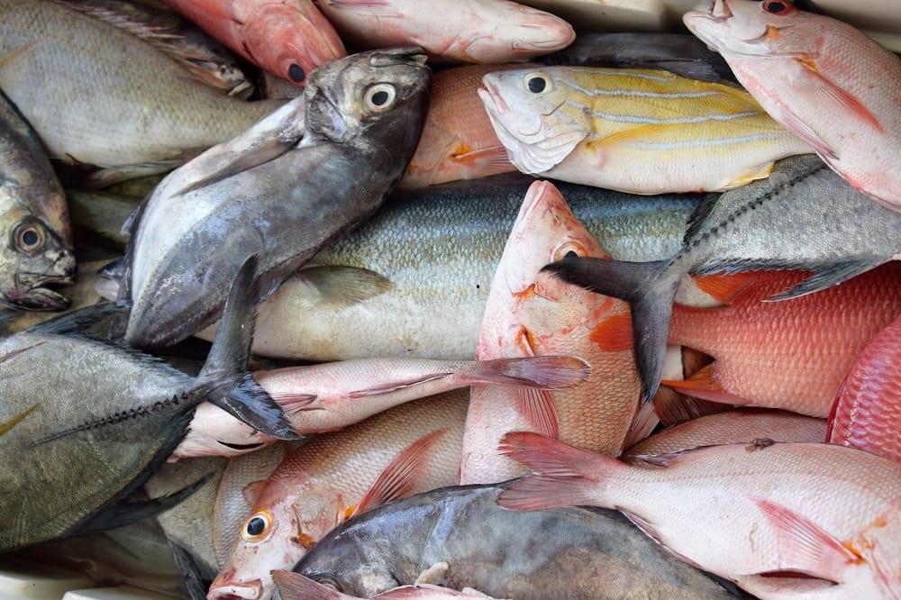 Close up of fish at the market