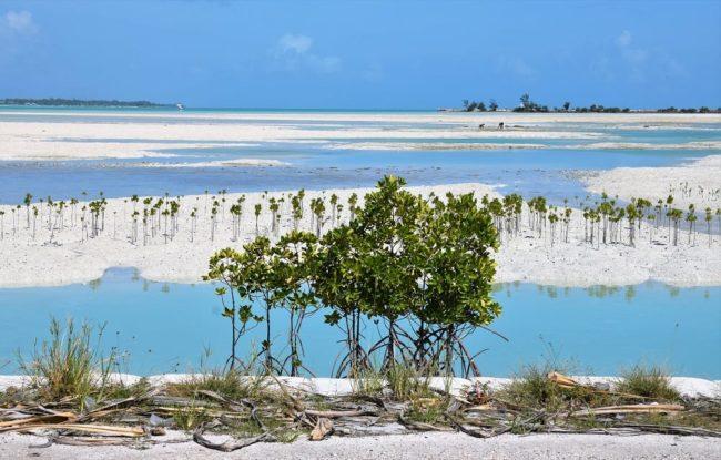 Mangroves in a blue lagoon at Kiribati