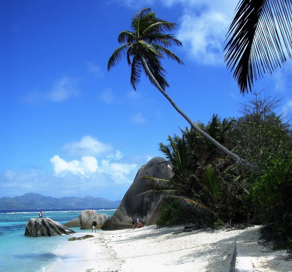Bendy palm trees on Anse Source D'Argent, La Digue