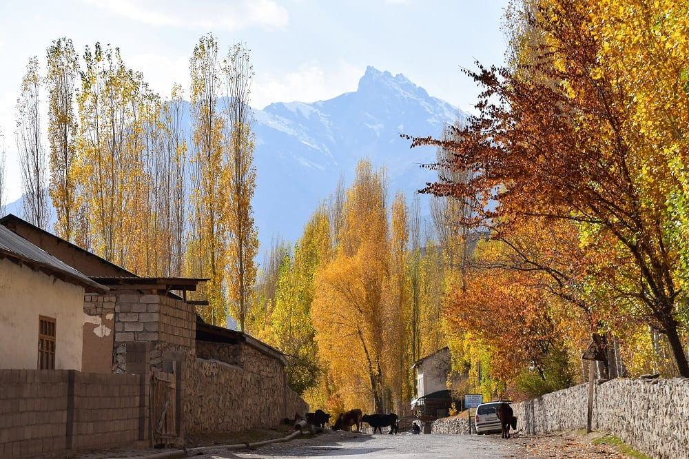 Autumn colour in the trees along a lane leading up to the mountains in Tajikistan