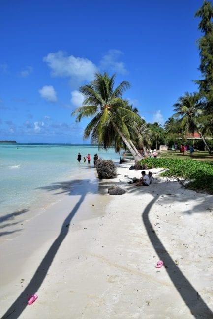 Palms throw shadows on Micro Beach Saipan