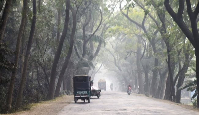 Mist in the tall trees along the road creates an eerie scene in Bangladesh