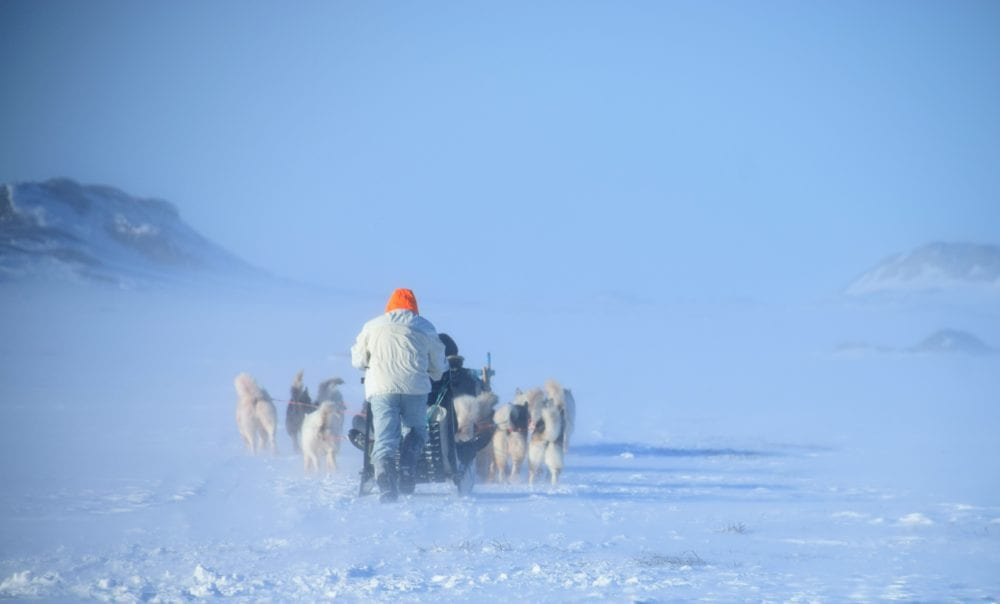 Huskies pulling a sled in Greenland, seen from behind