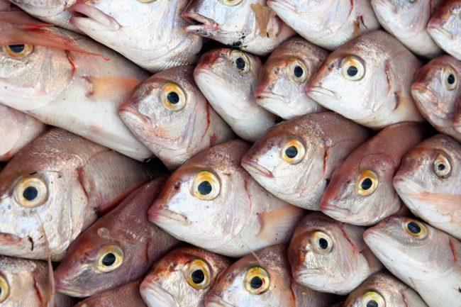 Fish in the market in Algeria making a beautiful pattern