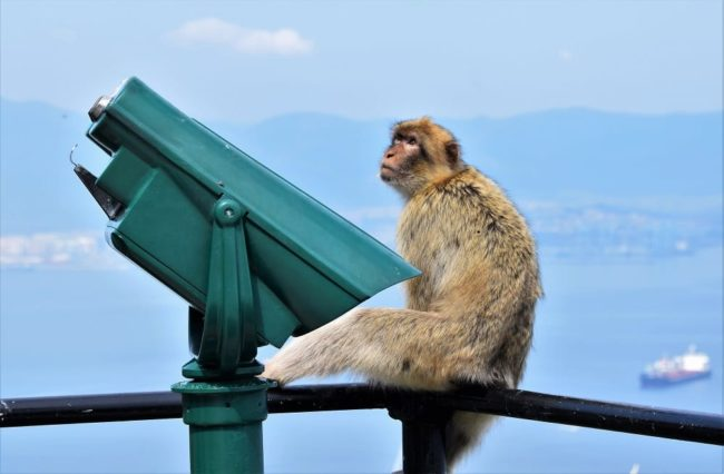 A barbary ape by a telescope on top of The Rock of Gibraltar