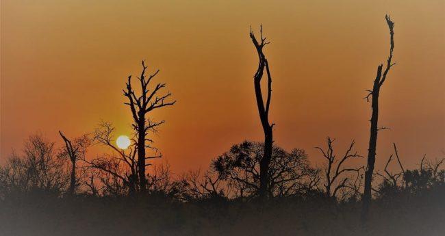 Sunset over the bush at Mkhaya