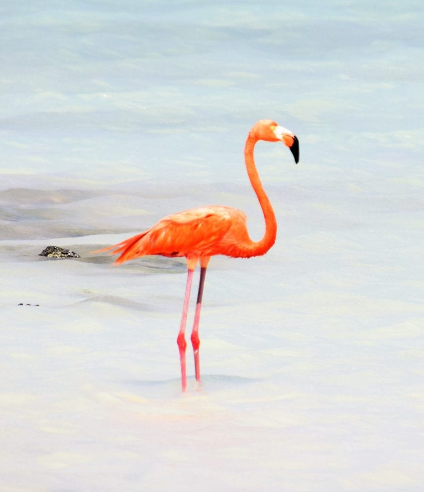 A very pink flamingo