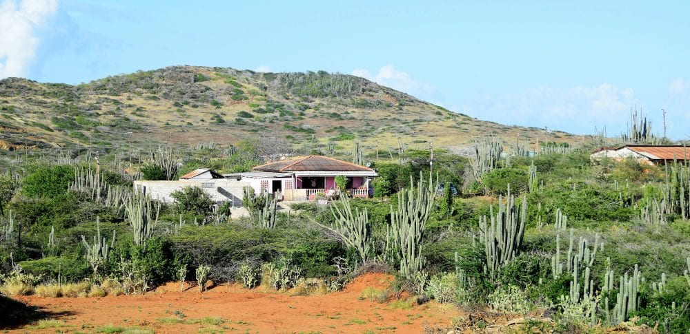 Houses and cacti at Westpunt, Curacao