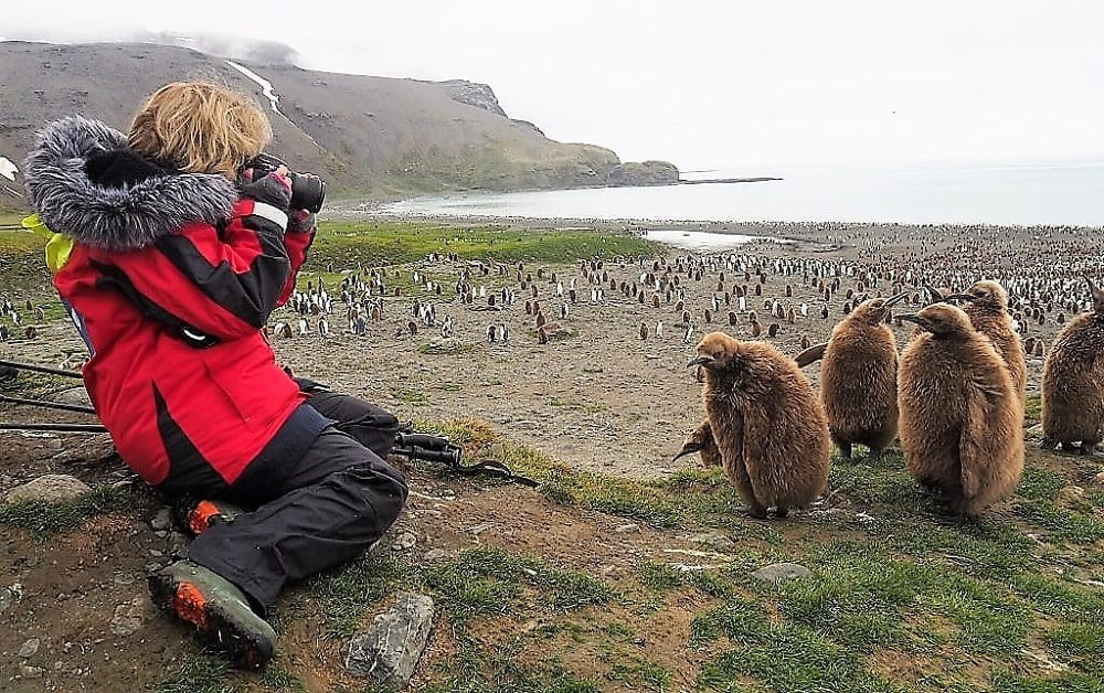 Sue photographs the cute king penguin chicks in a group in front of her at St Andrews Point South Georgia
