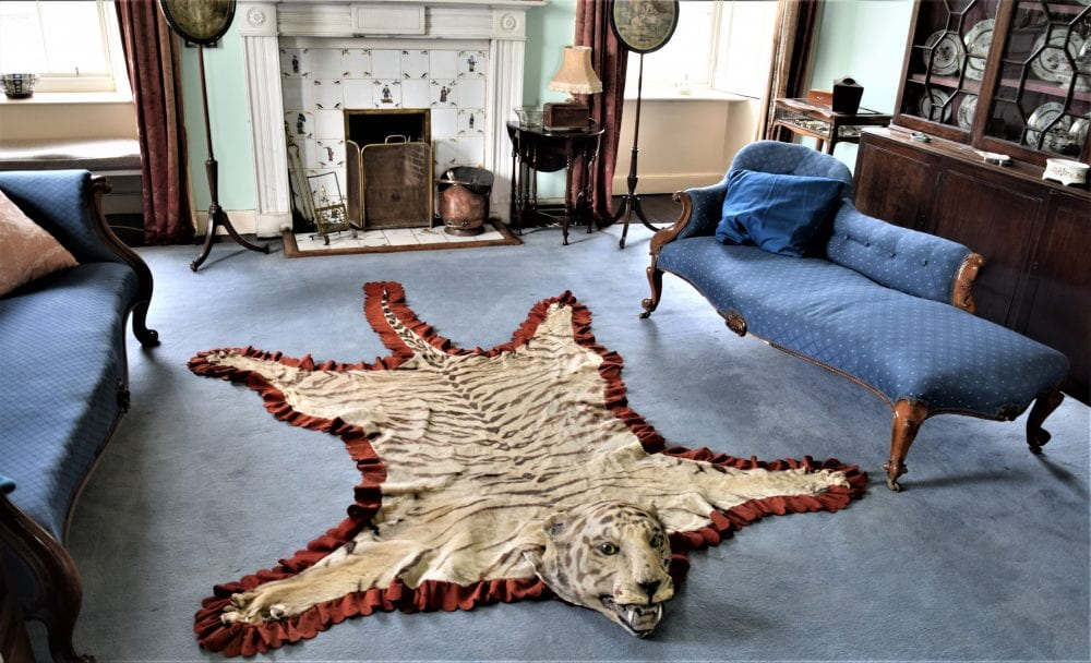 A leopard rug, in a room at Skaill House, Scotland