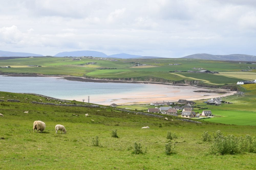 The beach at Scapa Flow, surrounded by green meadows, sheep wandering, seen from above, Orkney