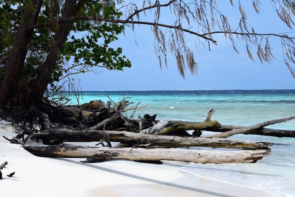 Driftwood on the beach at Picnic Island Solomon Islands