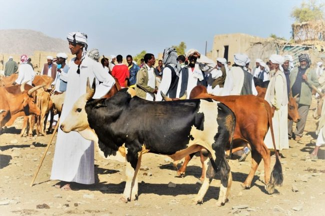 Eritreans selling their cattle in the market at Keren Eritrea