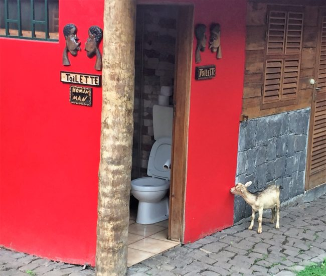 A baby goat outside the toilet in Sao Tome