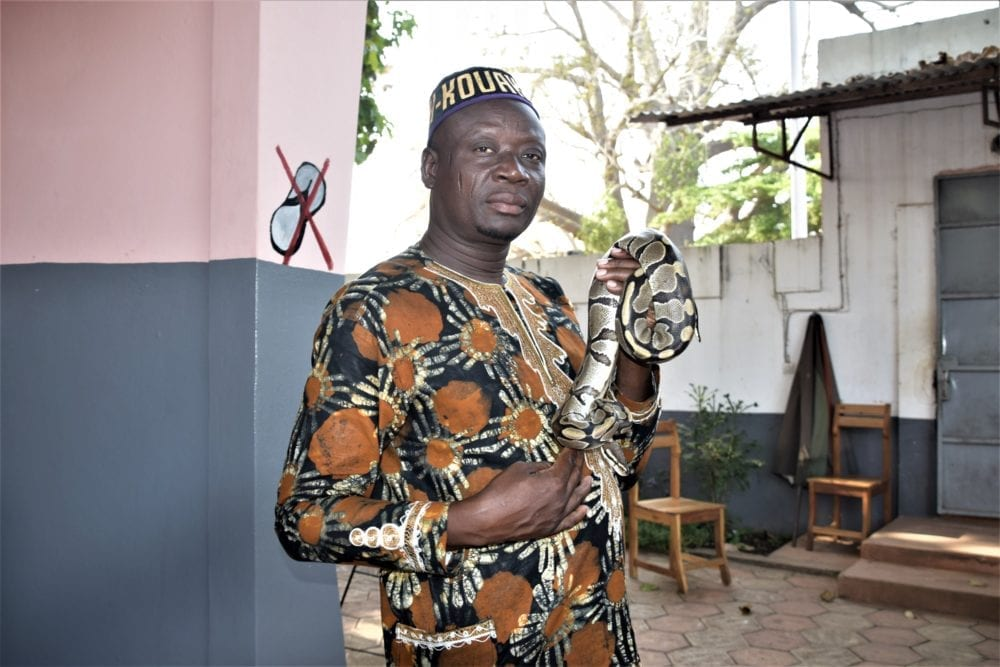 The python keeper in the temple in Ouidah displays a python