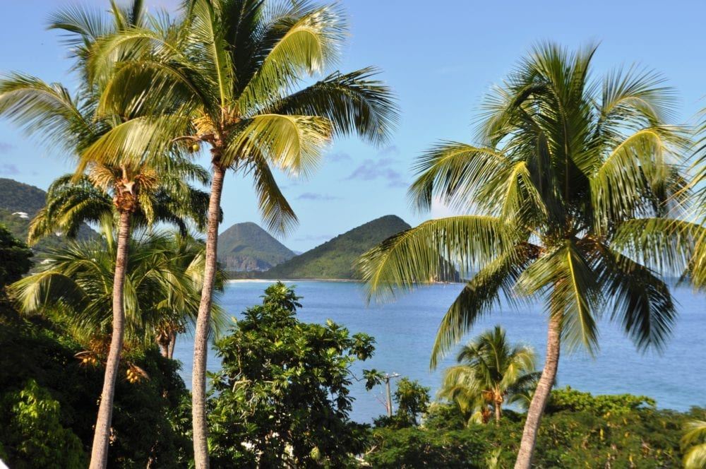 A view between palm trees across a bay to hills in Tortola, British Virgin Islands