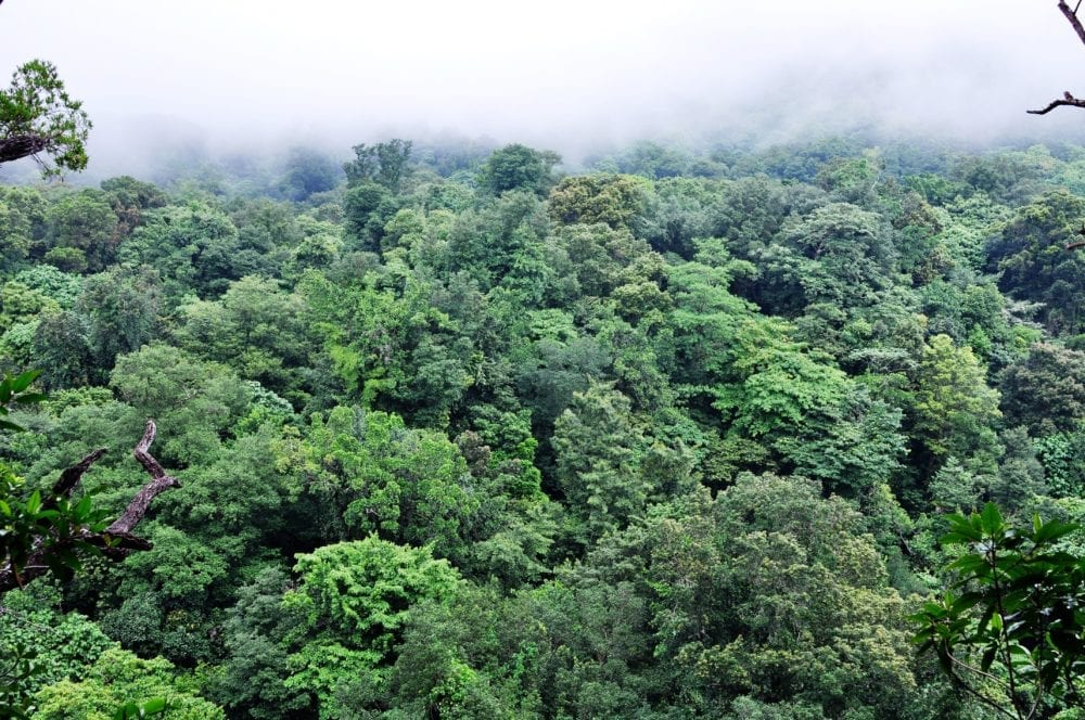 Mist over the rainforest at Dominica