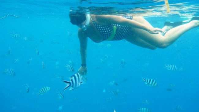 Sue snorkelling with fish, sea snake in top left corner