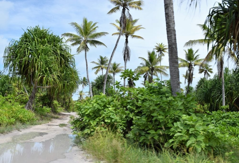 Puddles on the muddy road on South Tarawa