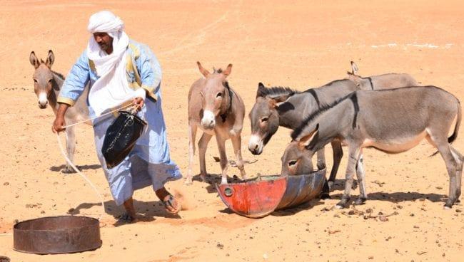 Naji waters thirsty donkeys in the desert