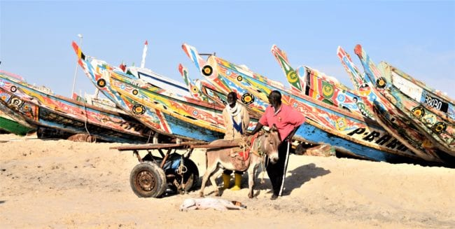 A donkey cart and a sleeping dog in front of colourful fishing boats at Port de Peche Nouakchott Mauritania