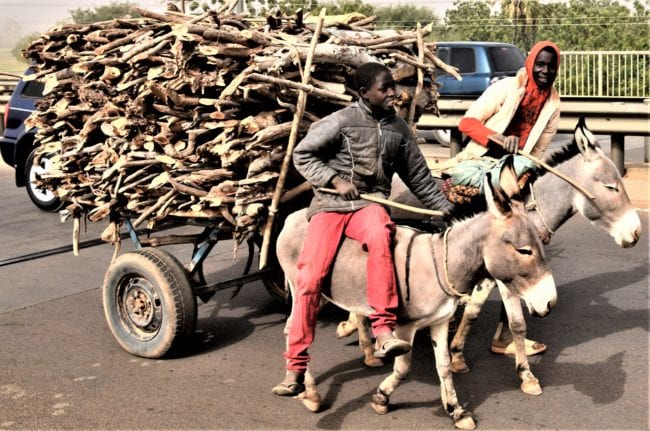 A donkey cart with two riders, pulling a load of firewood, Niger