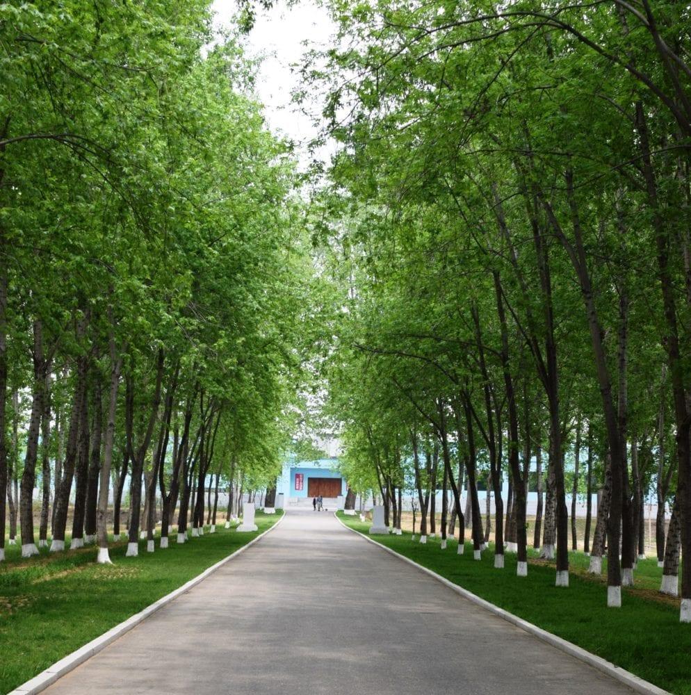 An avenue of trees in Pyongyang North Korea