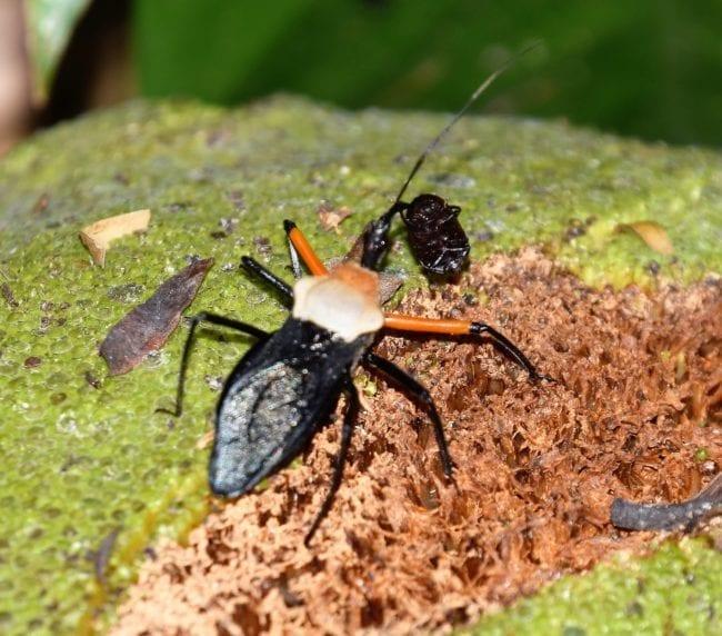 An orange and black bug on a leaf