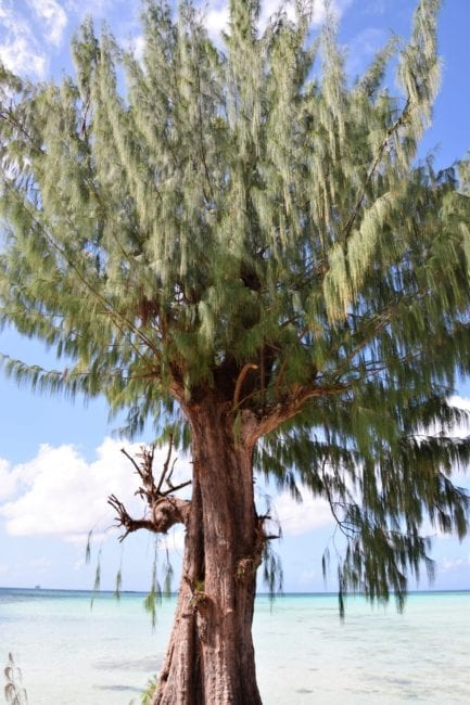 A tree by the water in Saipan
