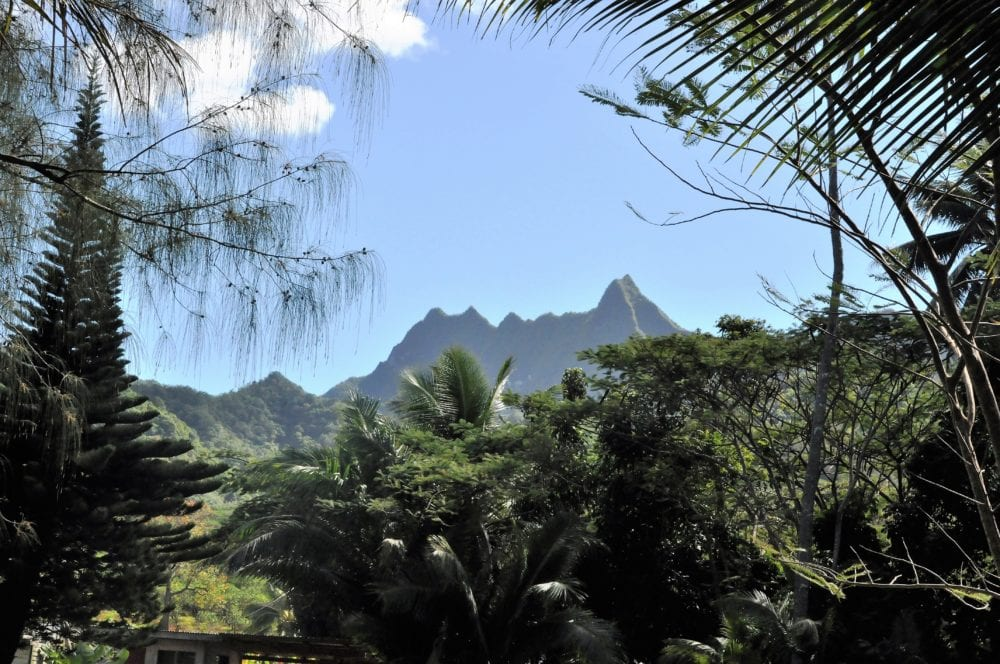 Jagged peaks viewed between palm trees on Rarotonga