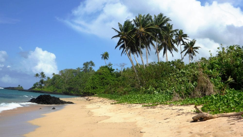 A golden sand beach backed by palm trees in Samoa