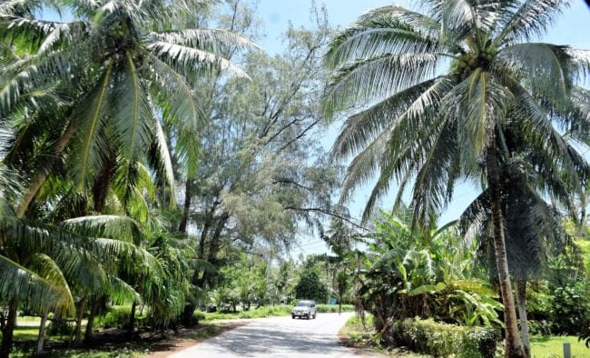 The road though the palms in Majuro