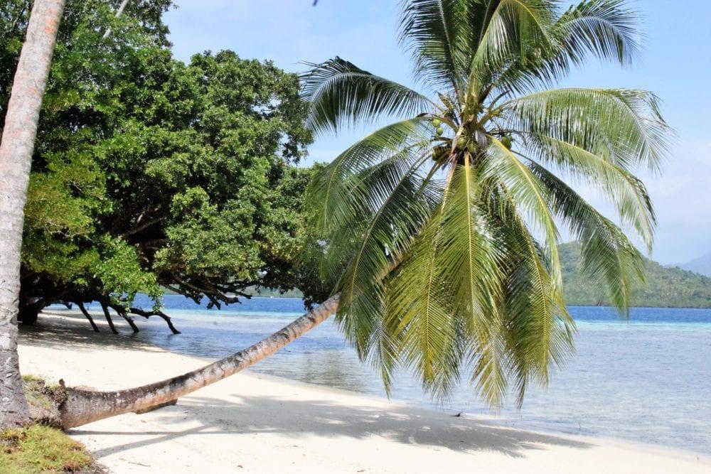 A bendy palm over the white beach at Tavanipupu Solomon Islands