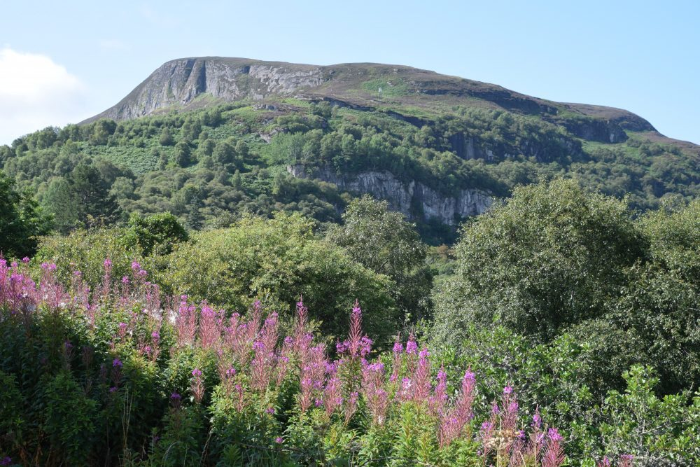 Hills framed by rose bay willow herb in north east Scotland